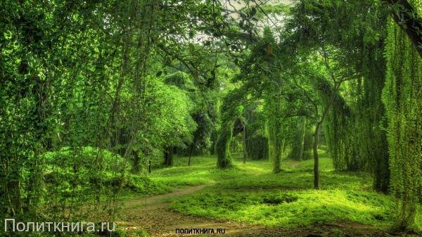 Кружка. Лесной пейзаж. №7
