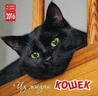 """Календарь на 2016 год на скрепке """"Из жизни кошек"""" (КР10-16106)"""