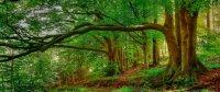 Кружка. Лесной пейзаж. №1