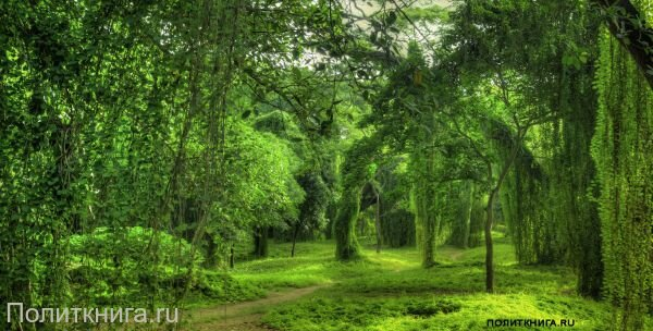 Кружка. Лесной пейзаж. №2