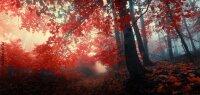 Кружка. Лесной пейзаж. №3