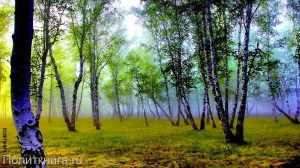 Кружка. Лесной пейзаж. №4